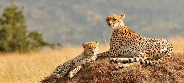 wildlife..