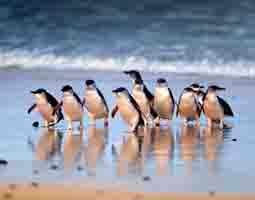 penguine-parade-small