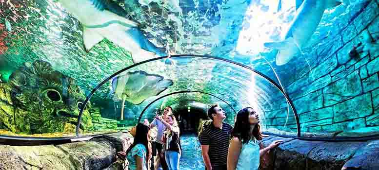 sydney-aquarium