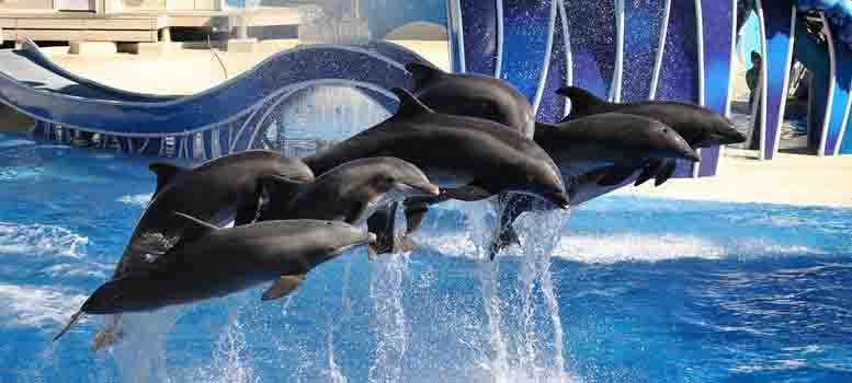 Sea-World-dolphin