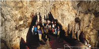 waitomo_caves